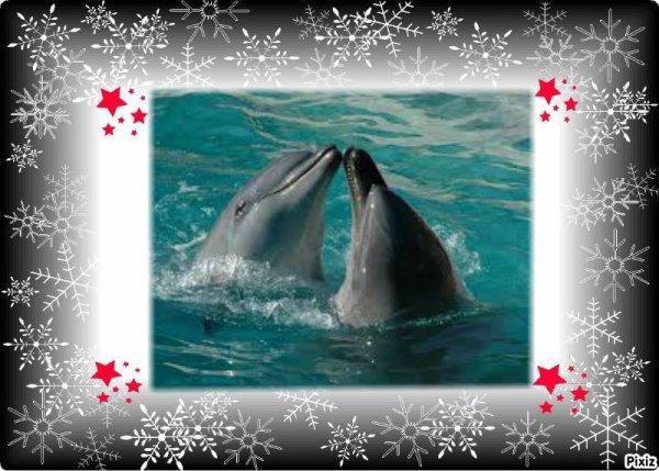 mon reve dauphin