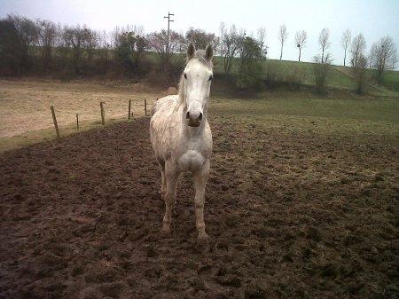 Le plus merveilleux des chevaux ...
