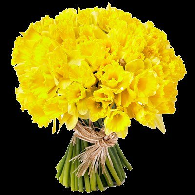 Un bouquet de jonquilles r flexions intimes for Bouquet a offrir