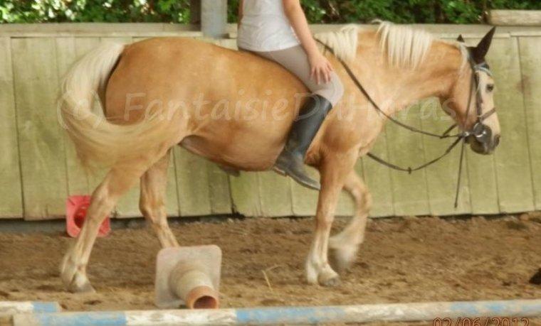 Très loin, au plus profond du secret de notre âme, un cheval caracole...un cheval, le cheval! Symbole de force déferlante, de la puissance du mouvement, de l'action.