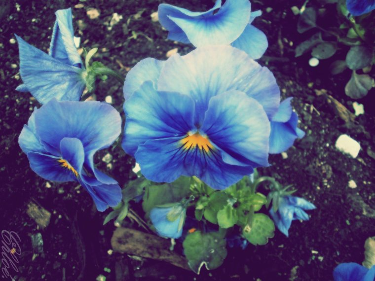 La fleur des rues.