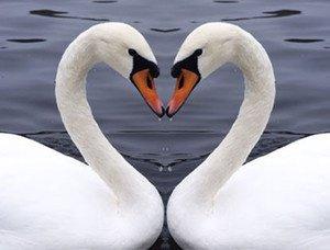 L'amour c comme la vie