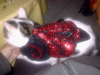 ma création tenu pour chat a vendre sur commande