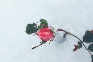 """"""" Loin du froid de décembre"""""""