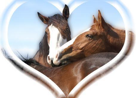 voila mes chevaux