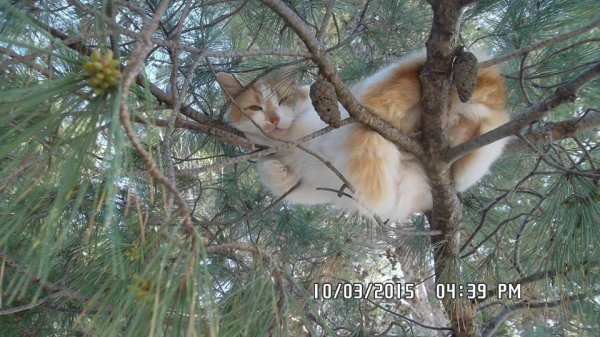 le chat somnolente !