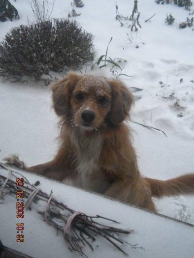 Mon tit chien: Kamel
