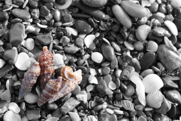 ... photos du jour ... petit tour a la plage ...