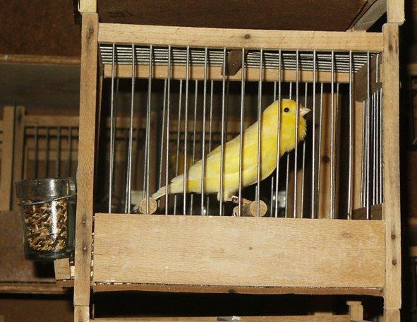 oiseaux flawta