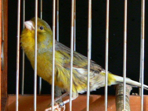 oiseaux harz