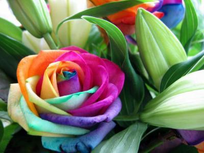 Signification Des Couleurs Des Roses Fankiki