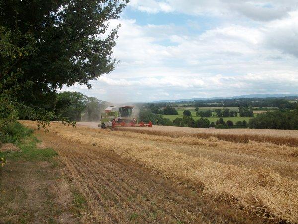 Moisson blé 2012 12:00