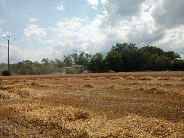Toujours dans les blé