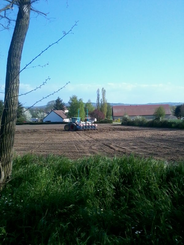 Semi de maïs 2013