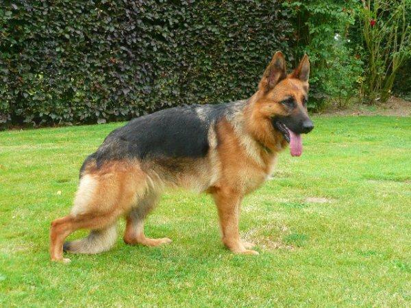 MON chien est MORT aujourd'huit le pauvre qu'il repose en paix  ='(  ='(