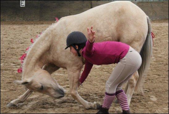 La fête du cheval, (ou du Poney)