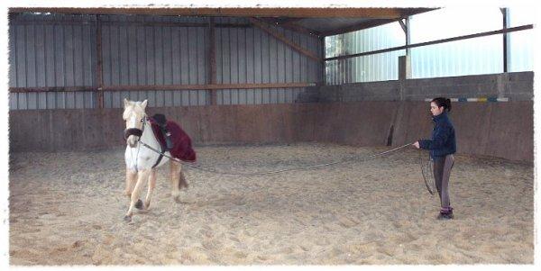 Apprenez à écouter ce que votre cheval vous murmure à l' oreille