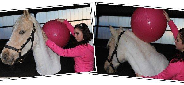 Mon poney c'est le plus beau !