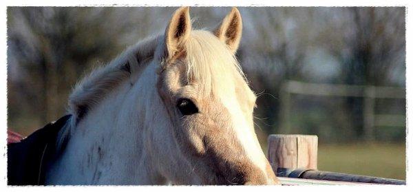 """"""" Ca fait 10 mille ans que les humains tentent de dresser les chevaux, 10 mille ans qu'on tombe, 10 mille ans qu'on se relève, qu'on invente des voitures, des avions et pourtant on continue de monter à cheval"""""""