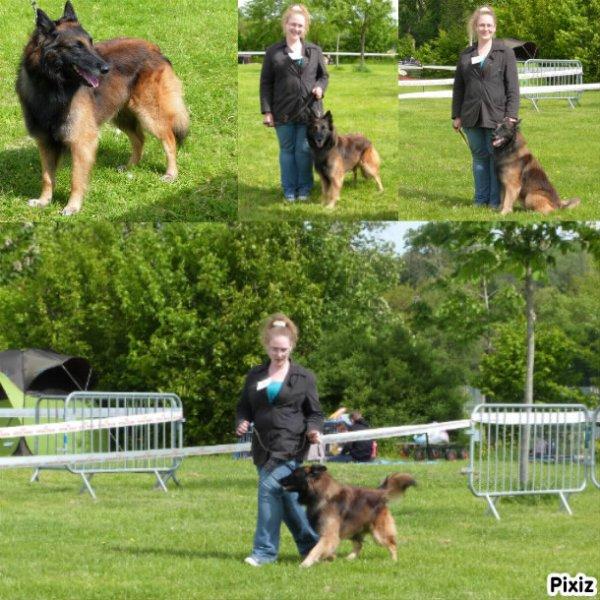 Exposition canine d'EVREUX (27) - Le 17 Mai 2012