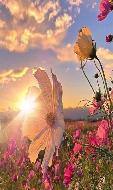 Bonjour. Il y a des matins..où l'on aimerait bien..ne pas se lever.. Eviter la journée..savoir ce qui va se passer.. ne pas avoir le courage de l'affronter.. se faire petit dans sa bulle.. ne pas voir que tout bascule..  Pourtant pour avancer..Il faut savoir faire front..pour que demain soit sérénité..changer de route, passer le pont..  Alors courage .. et bonne journée à vous .....
