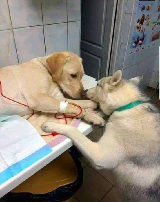 L amour  ...la fidélité..❤💛💚