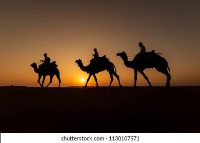 Algéria chameau