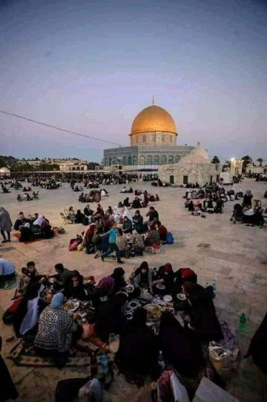 Vive Palestine