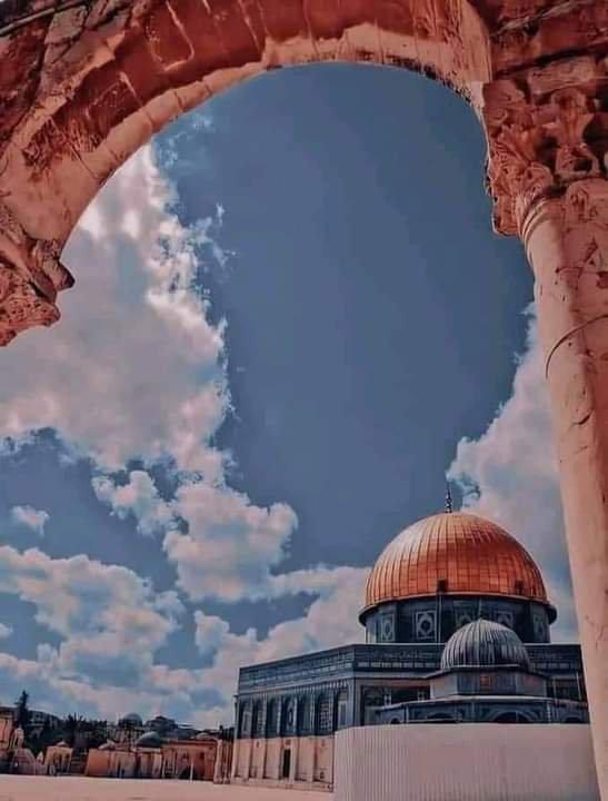 Vive Palestine 🇵🇸🇵🇸🇵🇸🇩🇿🇩🇿🇩🇿
