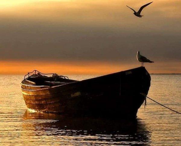 La vie, c'est simplement comme une barque où il est bon d'apprécier le bonheur de ramer……. Et puis surtout d'avancer avec ou à contre courant, savoir que son sort est aussi d'affronter la houle…..♥