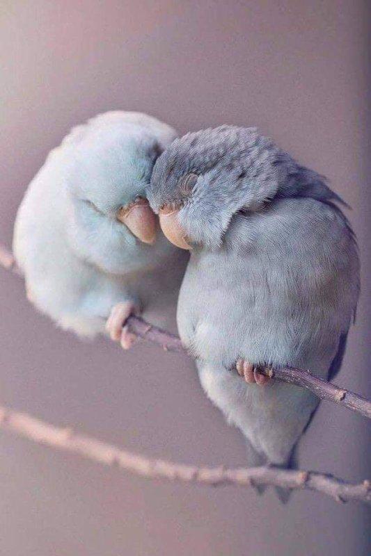 Dans la vie, on a parfois besoin de douceur...d'affection...de tendresse..de p'tits mots d'amour...de chaleur humaine....  Soyez généreux avec les personnes que vous aimez... ♥
