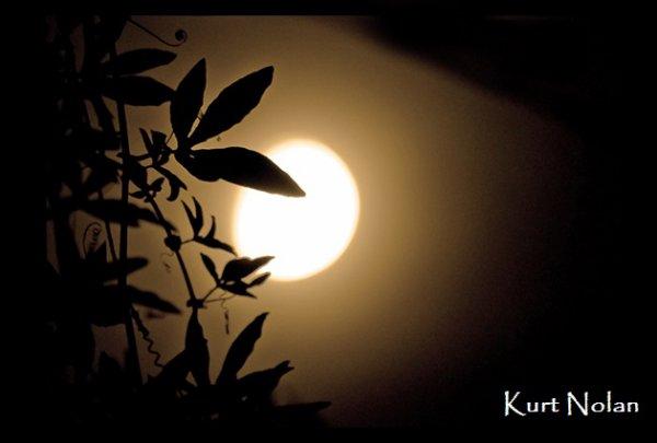 Silhouettes et lune
