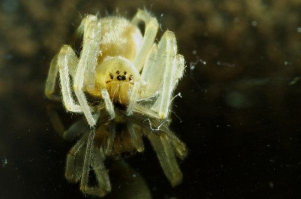 a cute spider