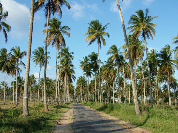 Mozambique, route de Zalala