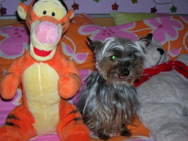 Aujourd'hui ma petite york Ollie est partit au paradis des chiens! je suis triste! elle était tellement gentille!