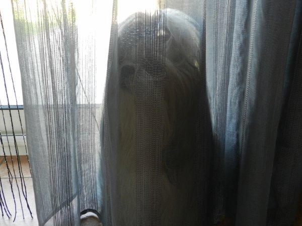 Partit de cache cache dans les rideaux a ma maman!