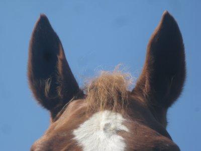 D'ou vient ma passion pour les chevaux?