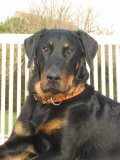 Photo de cooper-beauceron-77