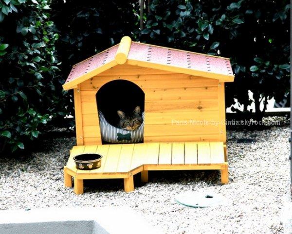 ♥ Photo du twitter de Nicole R. Tabitha, le chat de Nicole dans sa charmante demeure.