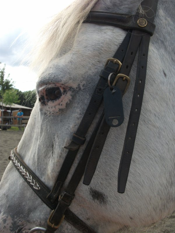 Monter à cheval donne un gout de liberté ...