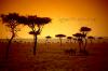 Une pensée pour TOUT mon peuple Africain Ce qui ce passe en CIV nous regarde TOUS