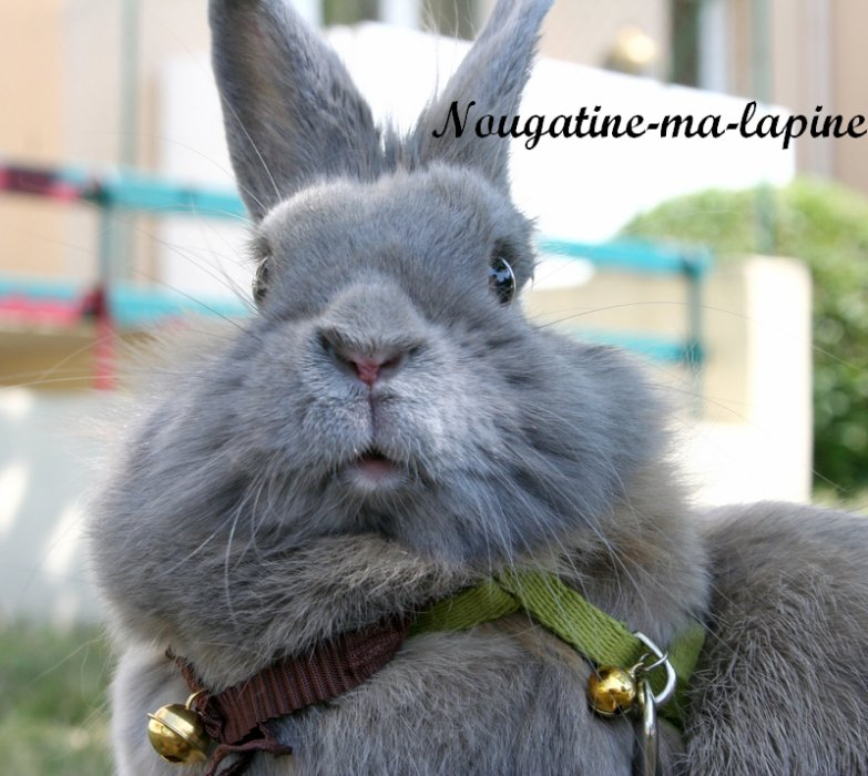 Journal intime d'une lapine ♥