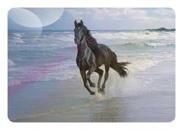 chevals