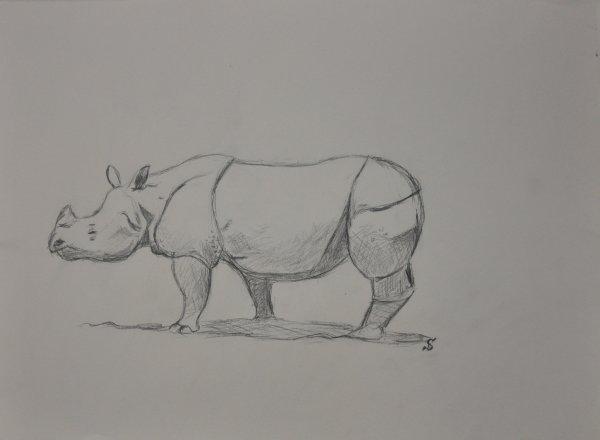 Dessin projet Rhinoceros