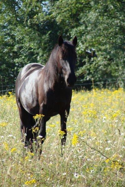 Trouvé 6 chevaux et poneys pour le club déjà :)