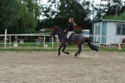Retour de l'association Irun Black avec 2 autres chevaux pour le club !