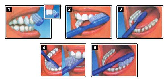 c ki dans ta familles celle ou celui kil se brosse plus les dents combien de fois ki