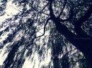 Photo de x-Familiaz-x3