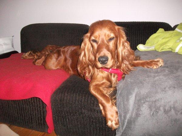 Chanel( ma chienne)