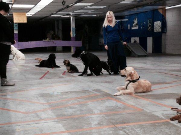 Apprendre aux chiens:ne pas bouger